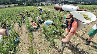 Les vandanges dans le chablisien (Yonne). Photo d'illustration. (MAXPPP)