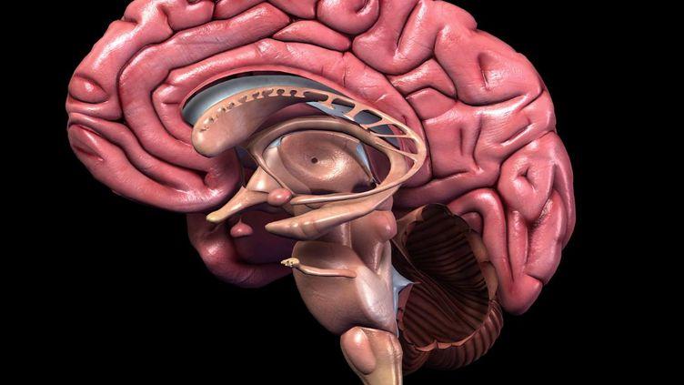 Selon une étude britannique publiée le 7 mai 2012, les psychopathes ont moins de matière grise dans la zone responsable de l'empathie. (PURESTOCK / SIPA )