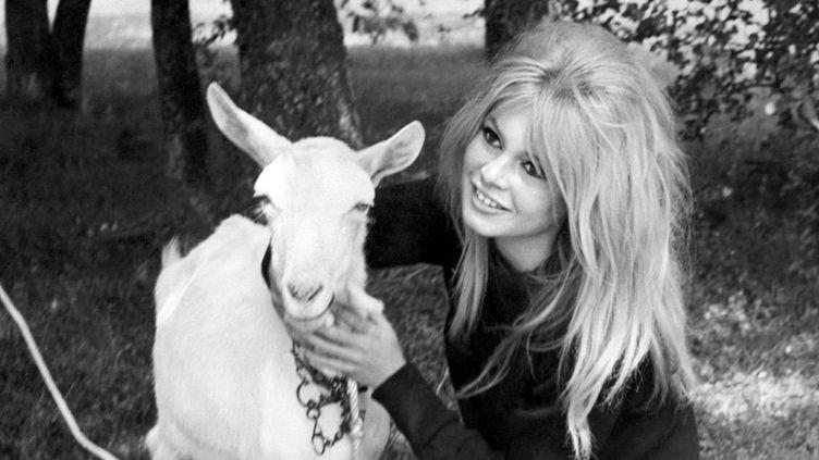 Brigitte Bardot caresse une chèvre, le 3 février 1975 sur Antenne 2, dans une émission dédiée aux animaux  (AFP)