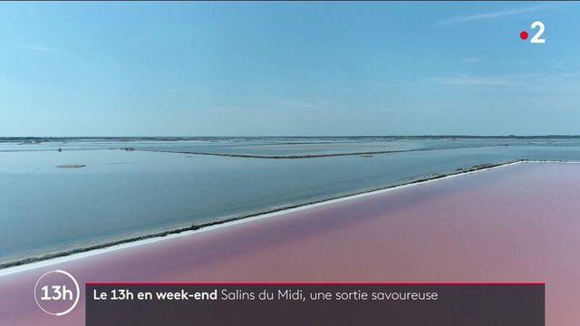 Salins du Midi : un marais où l'on voit la vie en rose