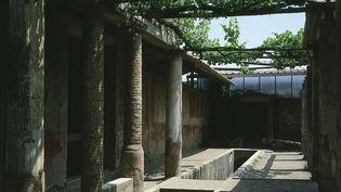 Une pergola de la maison de Loreius Tiburtinus, à Pompéi  (The Art Archive / Gianni Dagli Orti)