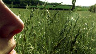 Des pollens sont présents dans l'air qu'on respire. (P.BROCARD BROCARD PASCAL / MAXPPP)