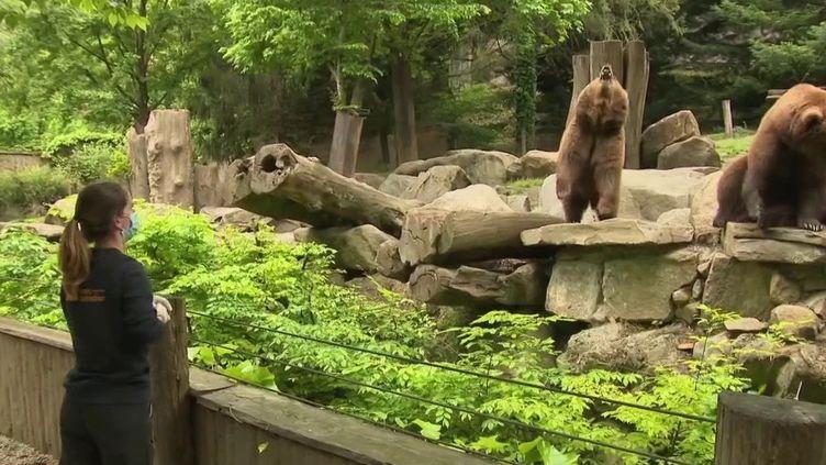 Le parc animalier des Pyrénées attire en général des centaines de visiteurs. C'est l'un des principaux sites touristiques de la région, mais cette année, confinement oblige, les allées sont désertes.  (France 3)