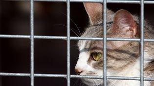 Une personne qui abandonne un animal de compagnie s'expose désormais à une peine pouvant aller jusqu'à trois ans de prison, contre deux auparavant. (JOEL SAGET / AFP)