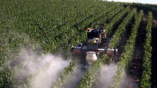 Traitement préventif des vignes contre le mildiou, le 9 juillet 2019 à Epernay (Marne). (ALEXANDRE MARCHI / MAXPPP)