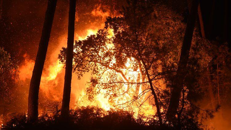 La forêt de Chiberta, à Anglet (Pyrénées-Atlantiques), est en proie aux flammes, le 30 juillet 2020. (GAIZKA IROZ / AFP)