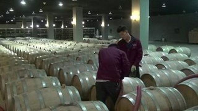 Feuilleton : tour du monde des vignobles (1/5)