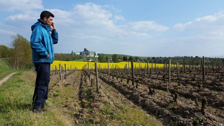 Jonathan Pabiot, viticulteur à Pouilly-sur-Loire, pourrait perdre 60% de sa récolte, pour la deuxième année consécutive; à cause du gel. (THIBAULT LEFEVRE / RADIOFRANCE)