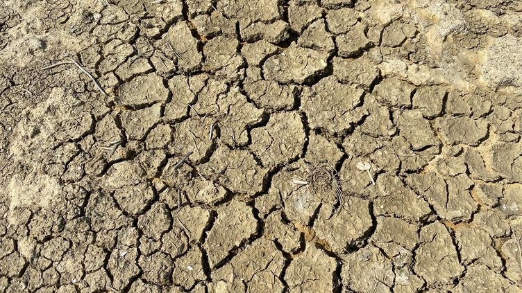 Un sol craquelésous l'effet de la sécheresse(illustration). (NOÉMIE GUILLOTIN / RADIO FRANCE)