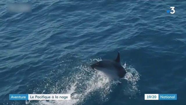 Aventure : le Français Benoit Lecomte traverse le pacifique à la nage