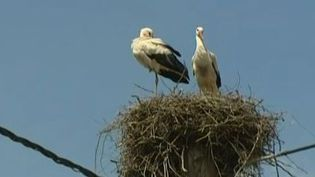 Capture d'écran.Brebotte (Territoire de Belfort) accueille, depuis plus d'un an, un couple de cigognes en haut d'un pylône électrique. ( FRANCE 3 / FRANCETV INFO)