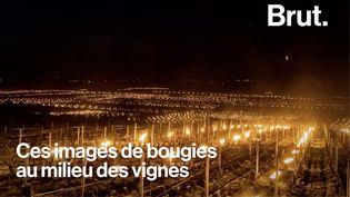 """VIDEO. Gel : """"Ces semaines-là, elles sont vraiment cruciales pour nous viticulteurs, pour notre métier"""" (BRUT)"""