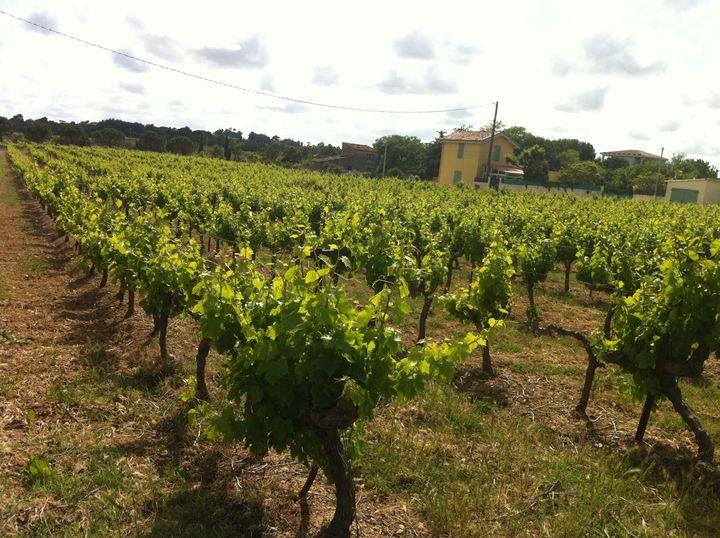Deuxième secteur excédentaire de la balance commerciale française, après l'aéronautique et avant la parfumerie-cosmétique, la filière viti-vinicole exporte près de 8 milliards d'euros de vins chaque année. (RADIO FRANCE / GRÉGOIRE LECALOT)