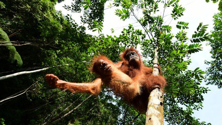 Les virus des primates ont globalement plus de risques de s'adapter à l'humain, selon une intelligence artificielle. (Illustration) (EMANUELESTANO / MOMENT RF / GETTY IMAGES)