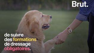 VIDEO. Aux États-Unis, les actes de cruauté envers les animaux considérés comme un crime (BRUT)