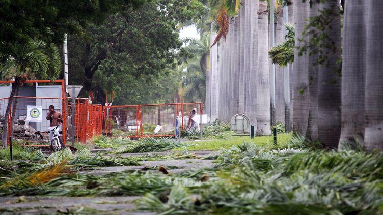 Des arbres déracinés à La Réunion, aprèsle passage du cycloneDumile au Port,dans l'ouest de l'île, jeudi 3 janvier2013. (RICHARD BOUHET / AFP)
