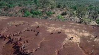 Au nord du Bénin, après un safari, deux touristes français et leur guide sont portés disparus depuis l'après-midi du mercredi 1er mai. Les autorités béninoises excluent l'hypothèse d'un enlèvement. (FRANCE 2)