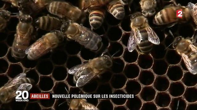 Abeilles : nouvelle polémique sur les insecticides