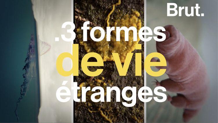 VIDEO. Quasi-immortelles, quasi-indestructibles… Trois formes de vie étranges (BRUT)