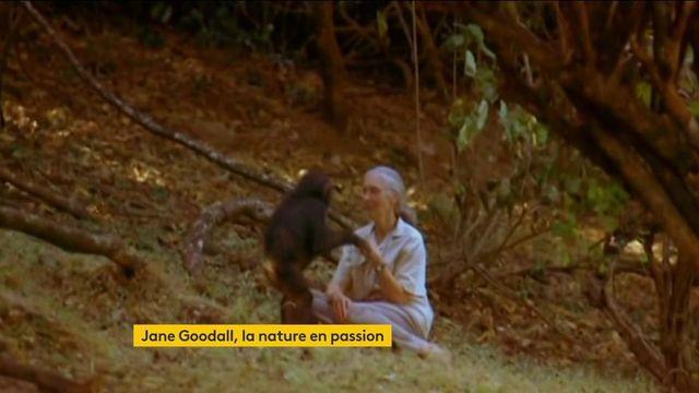 Environnement : Jane Goodall passionnée de nature depuis toujours