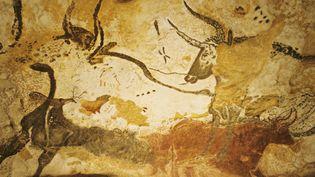 Des aurochs, des bovidés aujourd'hui disparus, peints sur les parois de la grotte de Lascaux, près de Montignac (Dordogne). (PATRICK SOMELET / AFP)