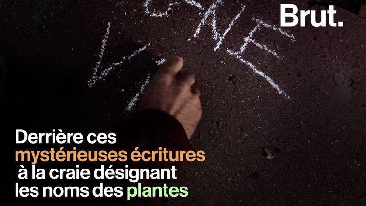 VIDEO. À Toulouse, un botaniste met en lumière les plantes sauvages qui poussent au milieu du bitume (BRUT)