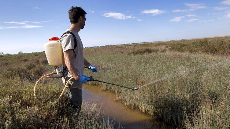 Un agent de l'EID (Entente interdépartementale pour la démoustication) pulvérise du BTI l'insecticide autorisé dans des zones humides ou ont été repérés des larves de moustiques. (GUILLAUME BONNEFONT / MAXPPP)