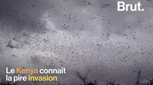 VIDEO. Au Kenya, des millions de criquets s'abattent sur le pays (BRUT)
