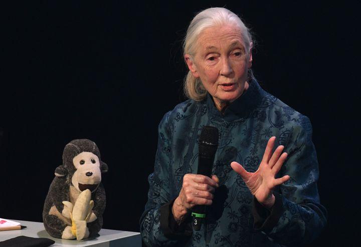 La primatologiste britannique Jane Goodall, lors d'une conférence, à Düsseldorf (Allemagne), le 8 décembre 2017. (HENNING KAISER / DPA / AFP)
