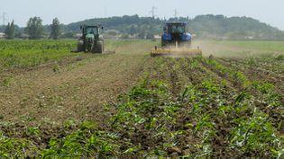 (En 2020, ils ne seront plus que 872.000 agriculteurs © Maxppp)