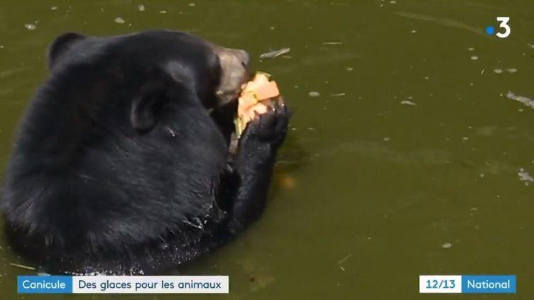 Des soigneurs proposent des glaces pour rafraichir les animaux. (FRANCE 3)