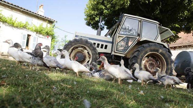(Le vide sanitaire se termine ce lundi dans les élevages d'oies et de canards du Sud-Ouest © Maxppp)