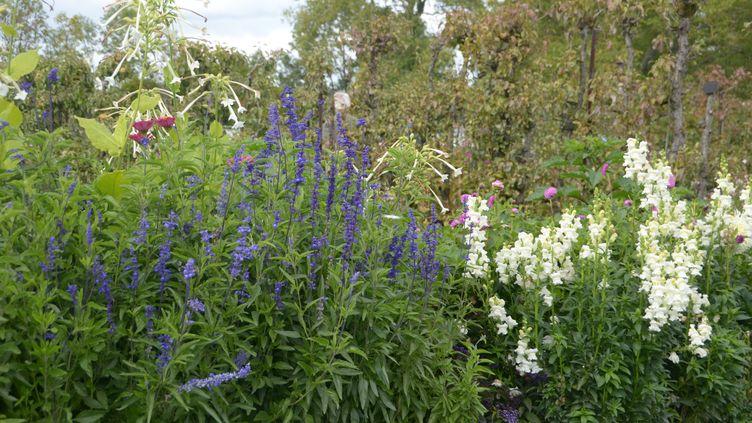 Pour avoir des plantes en forme, il faut un terreau bien adapté. (ISABELLE MORAND / RADIO FRANCE / FRANCE INFO)