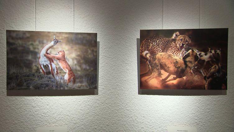 "Clichésde l'exposition""Wildlife photographer of the year"" (A. Wernert / France Télévisions)"
