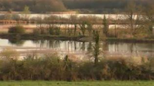 """La Brenne, le """"pays des 1 000 étangs"""", est une réserve naturelle couverte d'eau et de prairies. Elle est située dans l'Indre. (FRANCE 3)"""