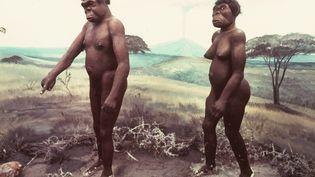 Photo de la reconstitution de Lucy (à droite) et de son supposé compagnon il y a 3,5 millions d'années. (AFP)