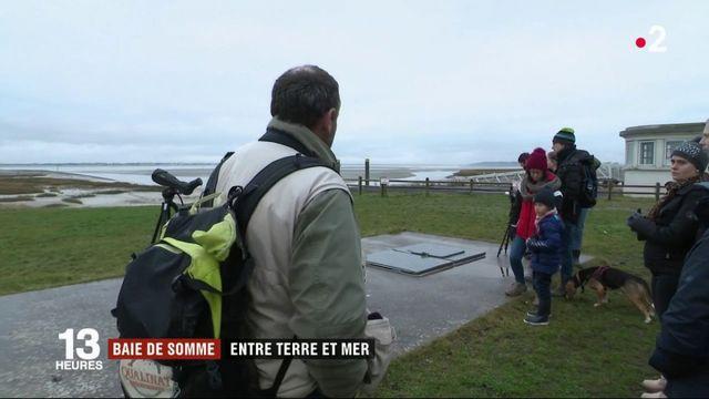 Baie de Somme : la perle du littoral