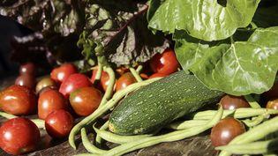Des légumes issus d'un jardin potager bio, le 24 juillet 2018. (LODI FRANCK / SIPA)