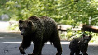 Un ours brun et son ourson sur une route à Sinaia, au nord de Bucarest, en Roumanie, en 2009. (RADU SIGHETI / REUTERS)