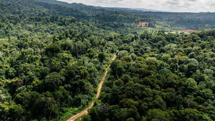 Le projet de Montagne d'or en Guyane (JODY AMIET / AFP)