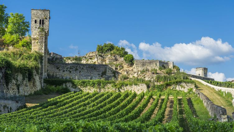 Des vignes de Saint-Emilion, en Gironde, en juillet 2016. (GUIZIOU FRANCK / HEMIS.FR / AFP)