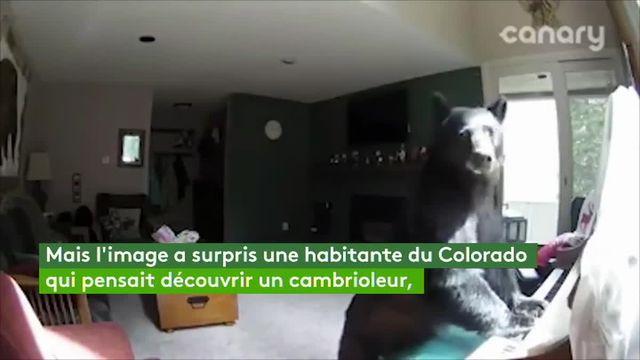 VIDEO. Un ours s'introduit dans une maison et joue quelques notes de piano