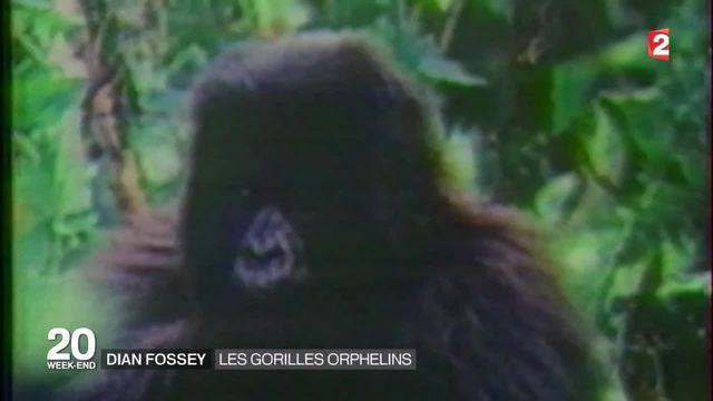 Il y'a 30 ans, Diane Fossey était assassinée