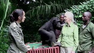 Environnement : Jane Goodall passionnée de nature depuis toujours (Capture d'écran franceinfo)