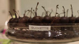 La guinette, une cerise à l'alcool enrobée de chocolat, est fabriquée par centaines de kilos à Bordeaux (Gironde) (CAPTURE ECRAN FRANCE 2)