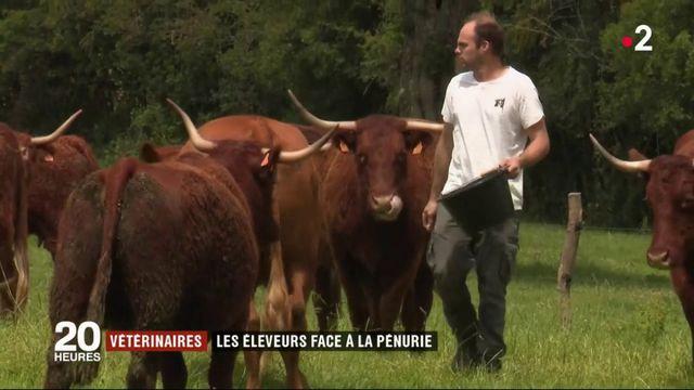 Les éleveurs confrontés à une pénurie de vétérinaires en milieu rural