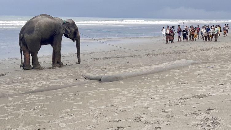 Unéléphant égaré sur une plage, le 29 juin 2021 à Teknaf (Bangladesh). (JASHIM MAHMUD / AFP)