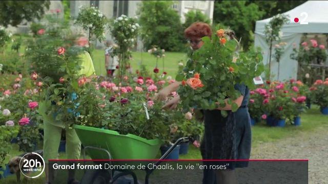 Oise : les passionnés de roses se retrouvent au Domaine de Chaalis