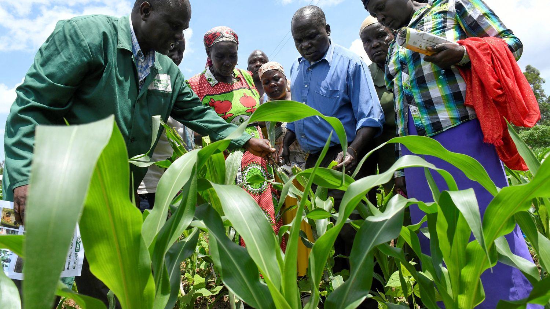 Quelles stratégies agricoles adopter pour nourrir demain deux milliards d'Africains?
