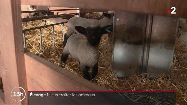Agriculture : mieux traiter les animaux